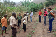 Farmers' Field Schools assist rural communities in Cabo Verde